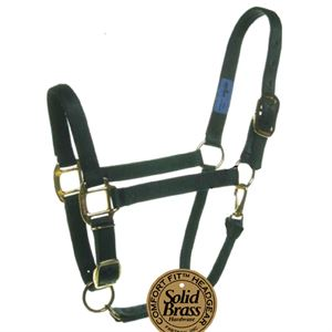 Weanling Halter Red Tag