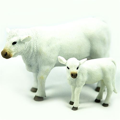 Charolais Cow and Calf
