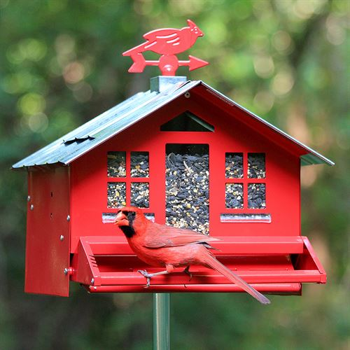Squirrel-Be-Gone ® Wild Bird Feeder